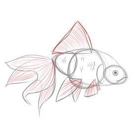How to Draw Goldfish