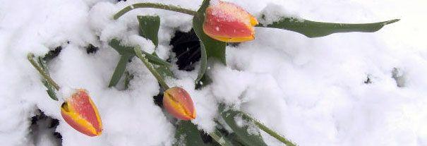 Sembrar verduras, hortalizas y hierbas durante el invierno