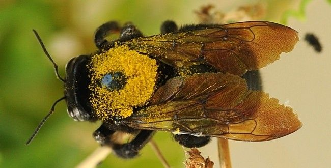 How To Get Rid Of Carpenter Bees Fast Carpenter Bee Bee