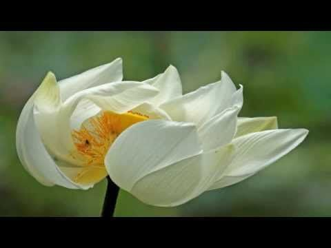 ▶ Abraham Hicks ~ How to help others without sacrificing your own alignment - YouTube