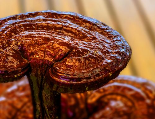 Ganoderma By the Numbers
