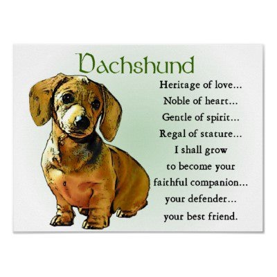 DachshundPuppies, Best Friends, Posters Prints, Dachshund, Doxie, Families Dogs, Wiener Dogs, Little Dogs, Animal
