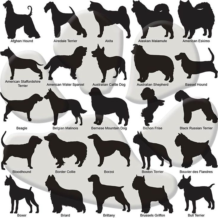 Best 25+ Dog silhouette ideas on Pinterest | Dog outline, Dog ...