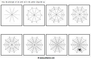 logische volgorde spinneweb