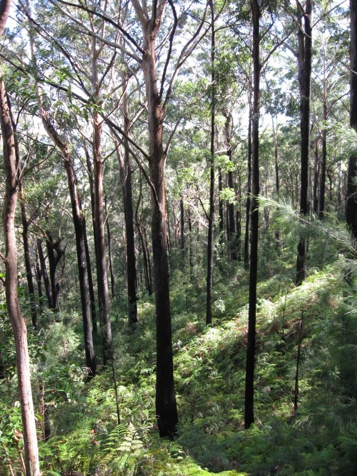 Walking the trail up Alum Mountain, Bulahdelah State Forest, NSW, Australia.