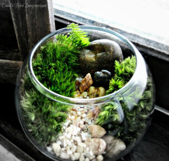 Terrarium Bowl Planter / Easy to Care For Indoor by DoodleBirdie