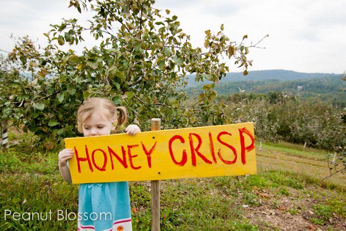 Top 5 Autumn Apple Recipes: Autumn Apple, Apple Recipes, Apple Crisp, Apples Recipes, Favorite Recipes