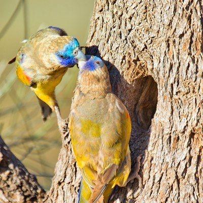 Australia s unique flora and fauna
