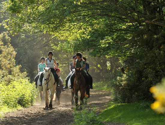 Wimbledon Village Stables, London: See 22 reviews, articles, and 22 photos of Wimbledon Village Stables, ranked No.60 on TripAdvisor among 178 attractions in London.