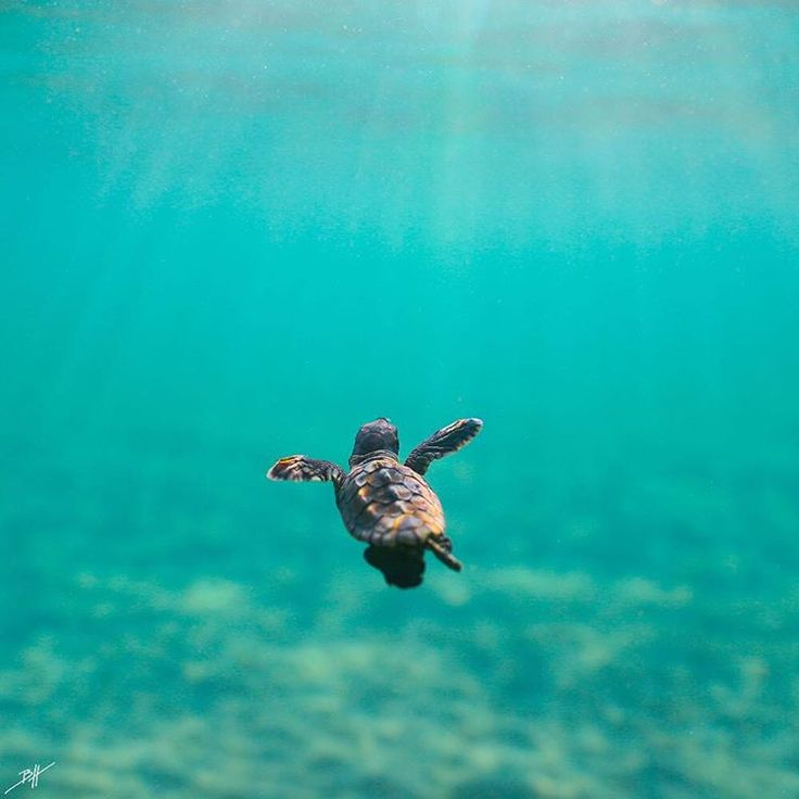 "3,610 Likes, 65 Comments - Ben Hicks (@benjhicks) on Instagram: ""Keep your heads up high swimming into the unknown. The environment and our youth need a positive…"""