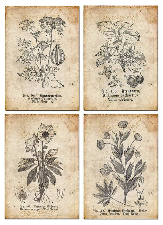 botanical floral, plants, drawing. Would be great art for the house!