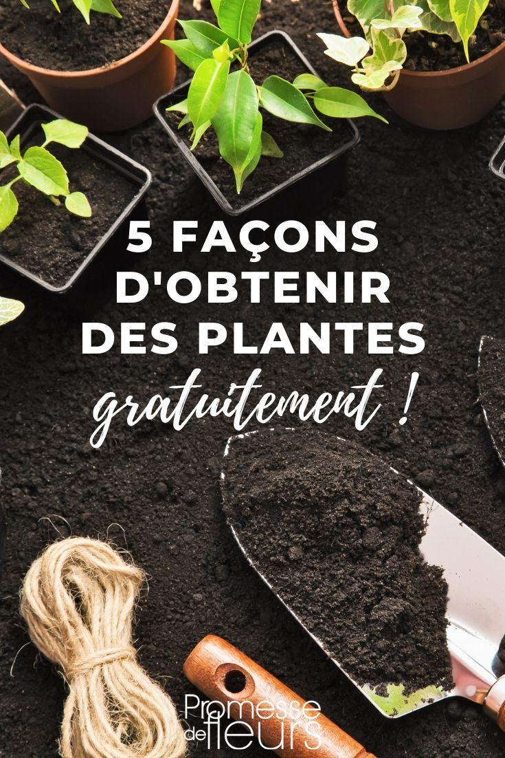 5 Facons D Obtenir Des Plantes Gratuitement Faire Une Bouture Plante Astuce Jardinage