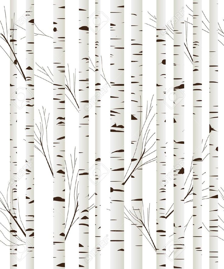black and white birch tree wallpaper kuchy pokoj nov byt pinterest birch tree