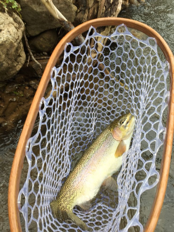 Elk river wv rainbow caught by the wandering aengus for Elk river wv trout fishing