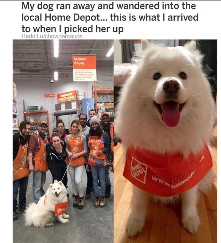Cute Feel Good Wholesome Meme Dump 1 My Dog Ran Away And Wandered Into The Local Home Depot This Is What I Ar Cute Baby Animals Funny Animals Cute Animals
