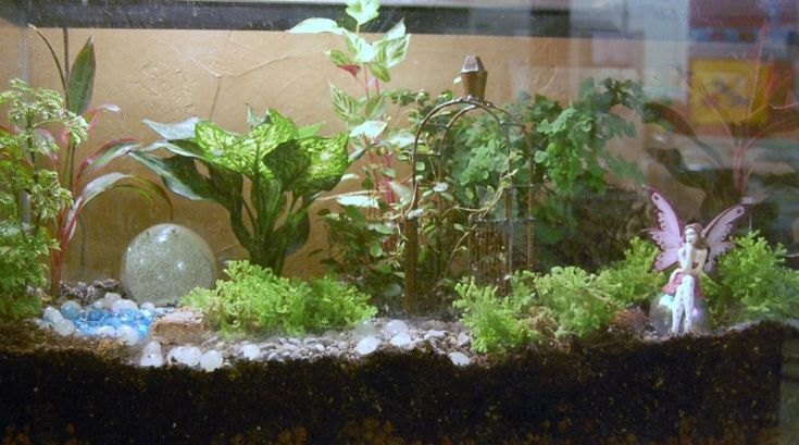 Terrarium fairy garden fairy garden terrarium garden for Garden with fish tank