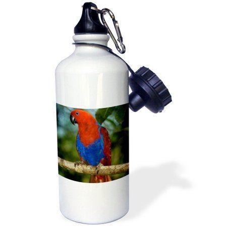 3dRose Papua New Guinea, Eclectus Parrot, tropical bird - OC12 BFR0032 - Bernard Friel, Sports Water Bottle, 21oz