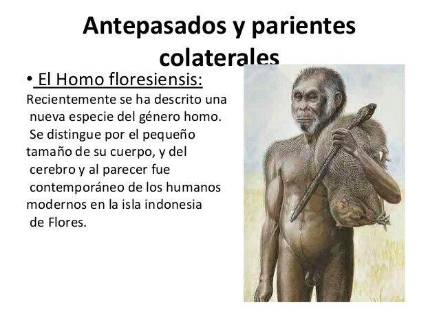 Elhombre de Flores(Homo floresiensis), es unaespecieextintadelgéneroHomoque habitó hasta hace 12000 años en la islaindonesiadeFlores. Es extraordinaria por el pequeño tamaño de su cuerpo de apenas 1 metro de estatura, y 25 kg de peso, su cerebro de menos de 400 cc, y por su reciente desaparición, pues ha sido contemporánea de los humanos modernos (Homo sapiens).