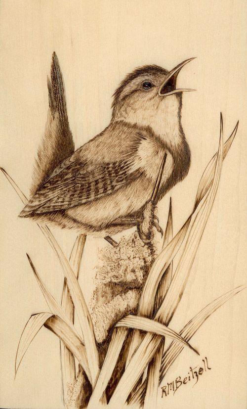 Wood-Burning Art Gallery | Marsh wren woodburning