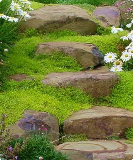 Best 25 Garden Steps Ideas On Pinterest: 17 Best Ideas About Rock Steps On Pinterest