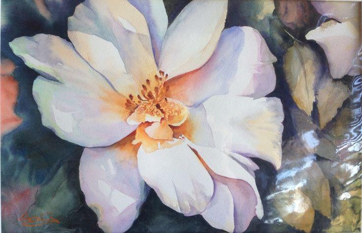 Winter's Rose, watercolour, painted by Anita van Grootveld