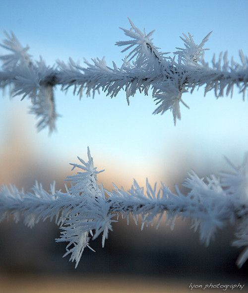 Hoarfrost....the Great Artist, Designer of everything doesn't just create....He creates everything beautiful and full of wonder...