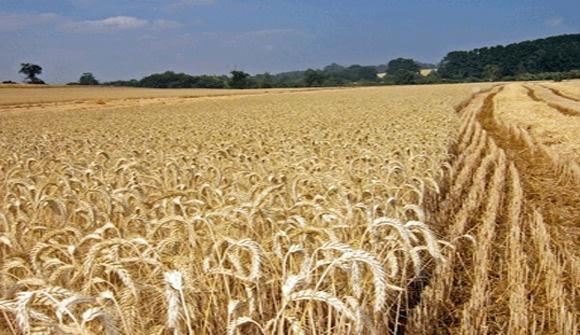 El abastecimiento alimentario mundial sólo es posible con una agricultura sostenible   Chile Desarrollo Sustentable