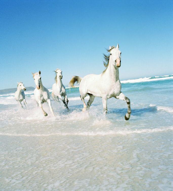 South Africa, Cape Town, Noordhoek, horses trotting in surf