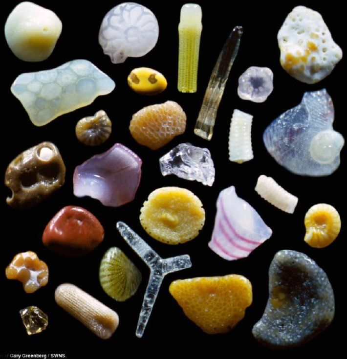grains of sand magnified 250x