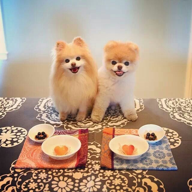 Buddy And Boo Precious Puppies Pinterest Cottages
