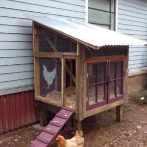 By Michelle Tullis If you have chickens, you have a battle with poop. And if you're getting chickens, you'll soon find out. I found that out last year when we bought our first mature laying hens … The first thing they did when we got them into the kennel to take home was to lay …