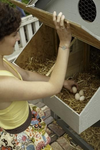 Nesting boxes for chickens | Living the Country Life | http://www.livingthecountrylife.com/animals/chickens-poultry/nesting-boxes-chickens/