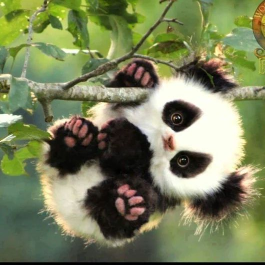 Ok I has a problem with this cute panda koala thing what in the universe made this happen