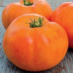 Persimmon Heirloom Tomato