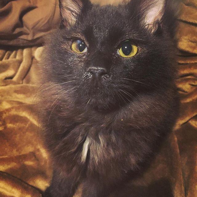 おすましたぬま。 お鼻がきらり鼻水で光ってるで。 かわい。 #cat#cats#catstagram #catsofinstagram #kitty#neco#neko#ねこ#猫#子猫#たぬき#小熊#愛猫#保護猫#たぬま記録