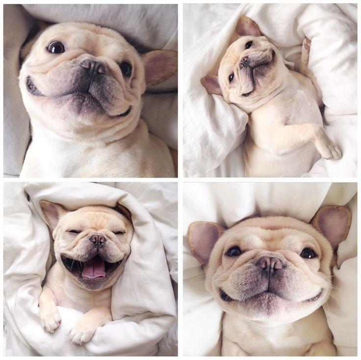 Good morning, Frenchie!