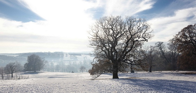 Country Park by YSPsculpture, via Flickr
