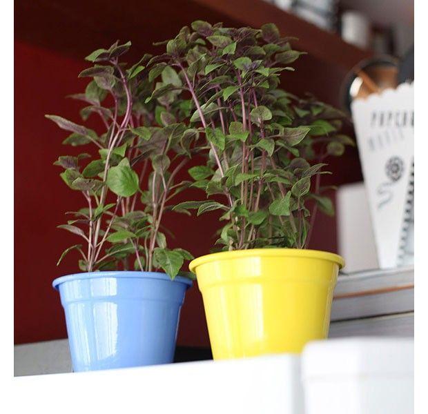 Vasos pequenos e coloridos, cheios de ervas frescas, também podem decorar a cozinha (Foto: Rogério Voltan/Editora Globo)