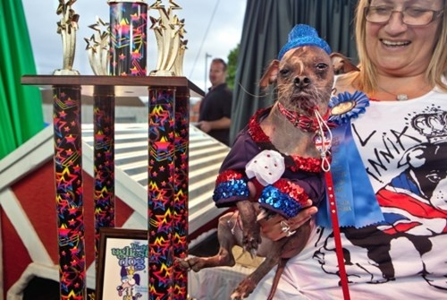 "From the article: ""Meet Mugly, who beat out 28 contenders to capture the 2012 World's Ugliest Dog title at the Sonoma-Marin Fair."" Well the name fits."