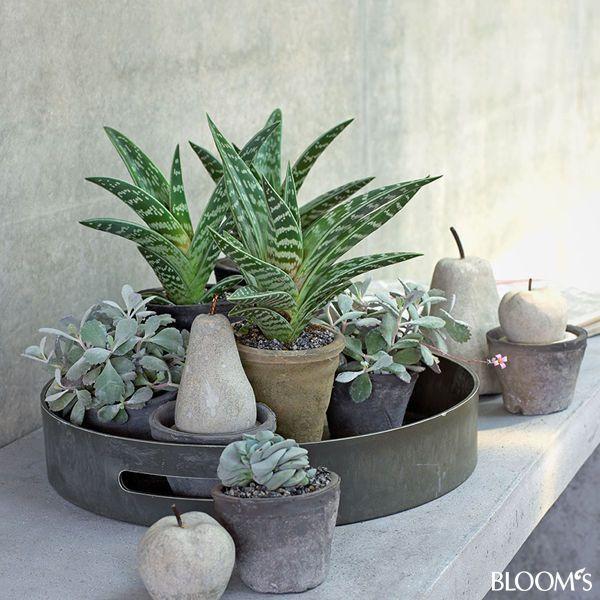 Wohndeko: Grau-grüne Zimmerpflanzen beleben Interieur – Ensemble auf Tablett