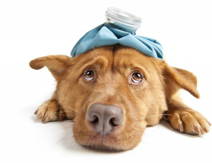 Dog Vomiting Treatment