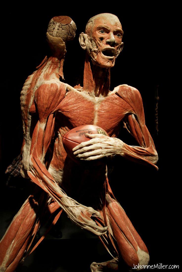 beautiful human body - 426×640