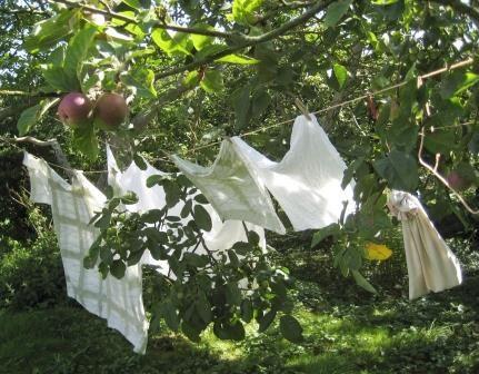 Laundry in the garden, Æblegaarden B&B, Langeland, Denmark, www.aeblegaarden.dk