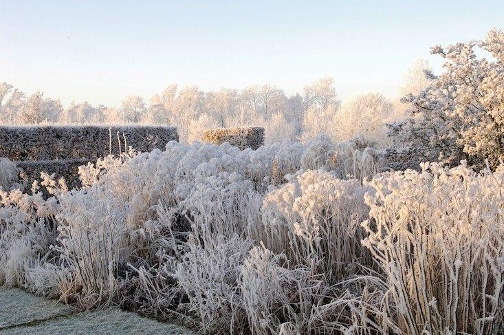 Piet Oudolf garden in winter ; Gardenista