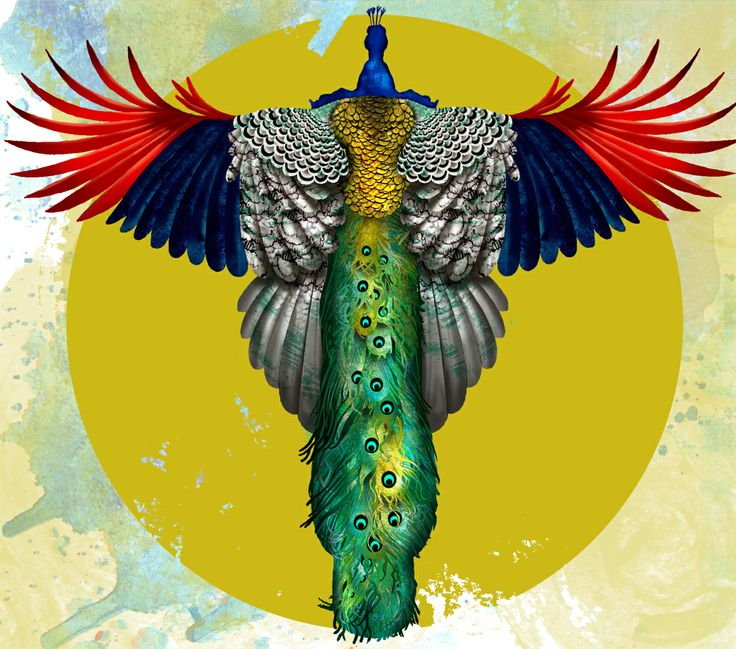 Flying Peacock | Sarah Chalek Illustration | Art (and ...