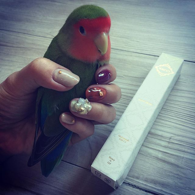 お直しネイルと気に入りすぎてストック購入してしまったハッチのハンドクリーム ・ ・ #ネイル #セルフネイル #ジェルネイル #nail #nailart #japan #fashion #love #girl #women#cute#lovely#happy#bird#parrot#pet#animal#cute#love#動物#ペット#鳥#かわいい#キュート #コザクラインコ #lovebird #インコ #hacci #コスメ#ハッチ #bodycare #handcream
