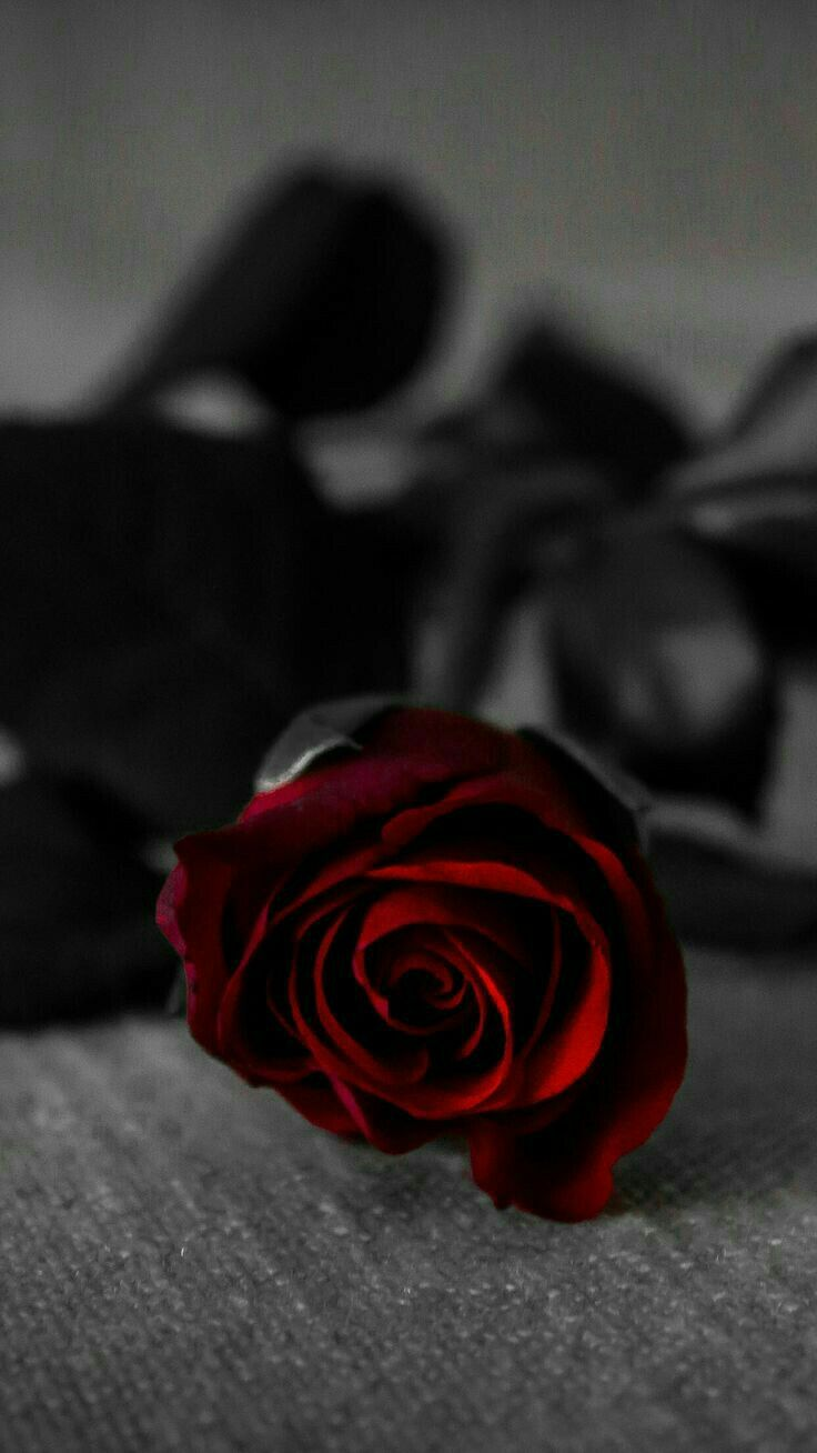 Pin By Debbie Bennington On Beautiful Roses Red Roses Wallpaper Aesthetic Roses Rose Images Dark red rose aesthetic wallpaper