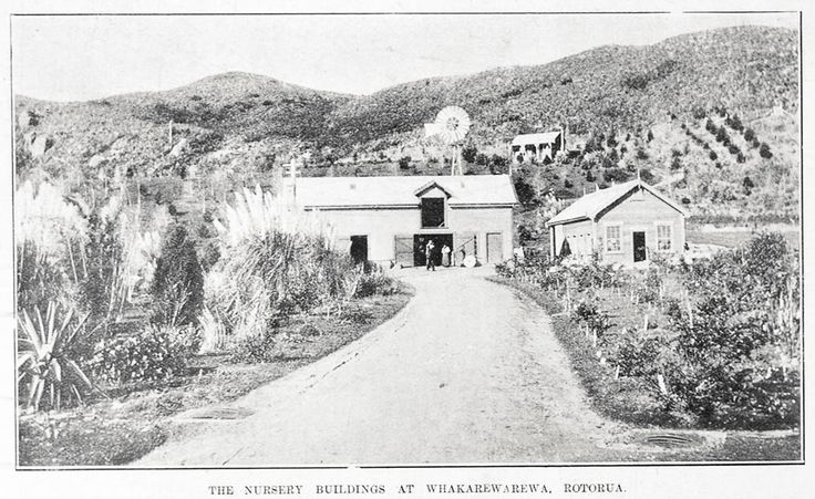 Nursery buildings, Whakarewarewa. Opened in 1898, by 1924 it was the largest tree nursery in the Dominion. Image from the Sir George Grey Special Collections