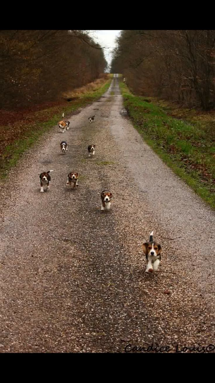 Beagle road...run like you own the road
