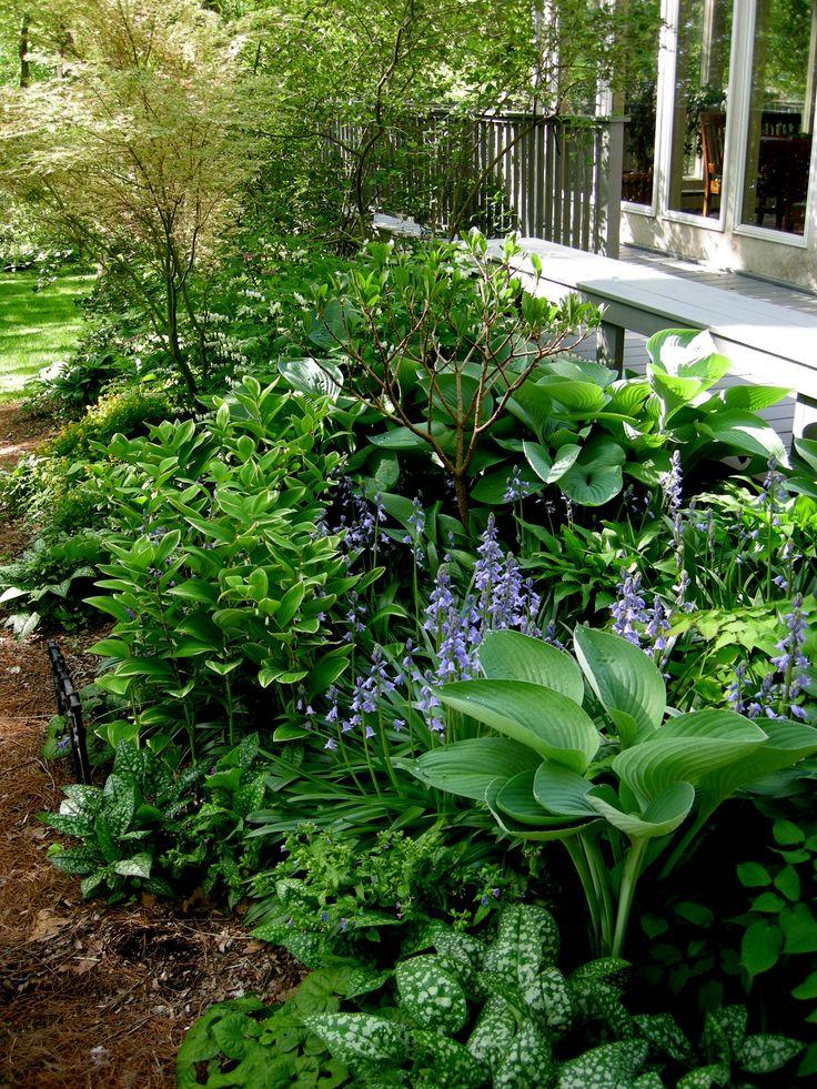 165 best Shade Gardens images on Pinterest Shade garden